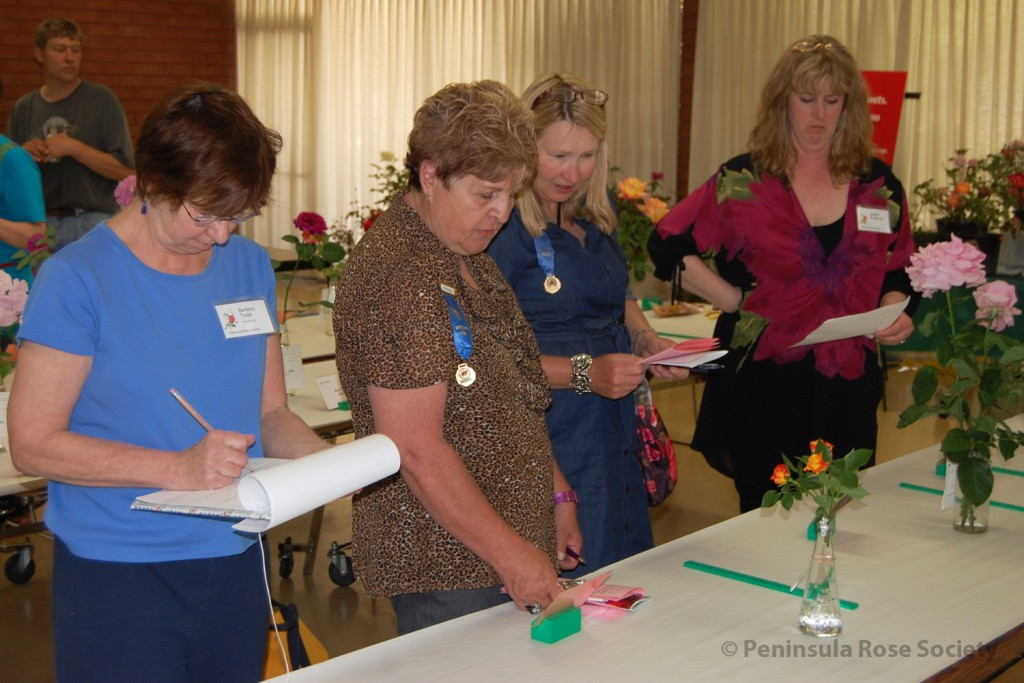 judging at an annual rose show